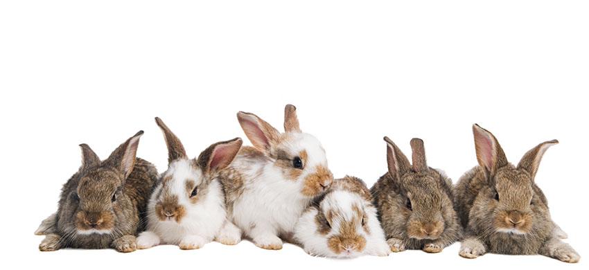 En bunke kaniner slapper af