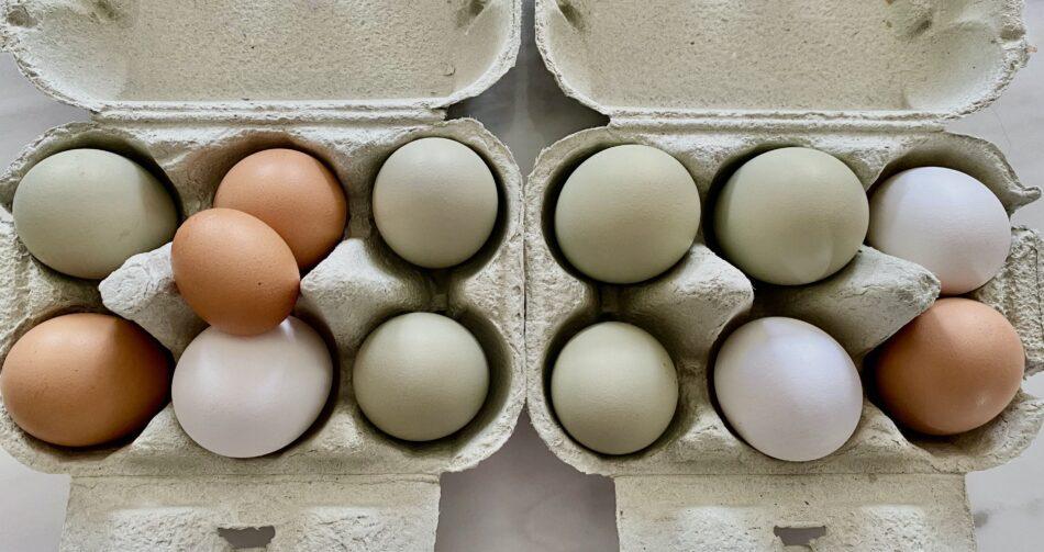 Æg i æggebakker
