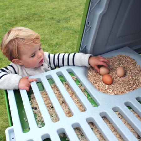 En dreng henter æg fra et eglu cube hønsehus