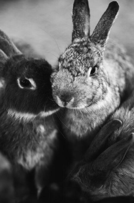 Kaniner putter sig sammen om vinteren