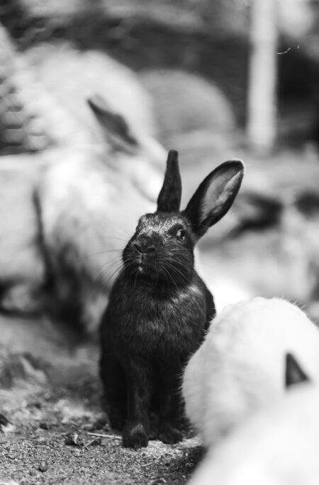Vil din kanin have det okay udenfor om vinteren