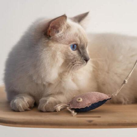 kat leger med en legetøjsvandmand