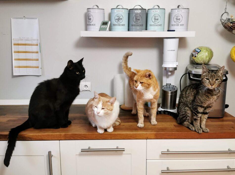 Fire katte sidder sammen på et køkkenbord