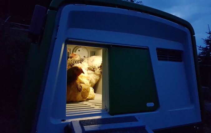 Høns i Omlet Eglu hønsehuset om natten