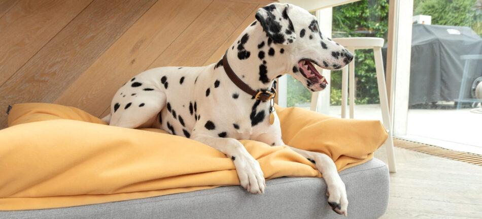 dalmatiner på en topology hundeseng med sækkepude topmadras