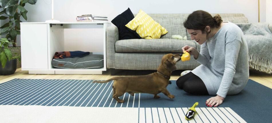 En gravhund leger indendørs med sin ejer med en Fido Nook hundeseng i baggrunden