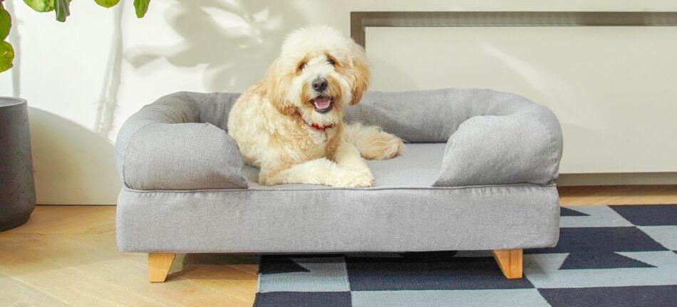 goldendoodle slapper af på en grå seng med støttekant