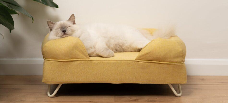 ragdoll kat sover på en gul katteseng med støttekant