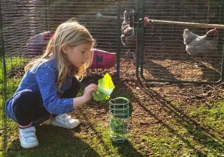 Hønsehold om efteråret fyld en godbidsdispenser